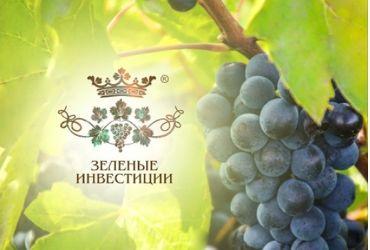Закладка виноградника по выращиванию винограда немецких сортов и последующее производство марочных вин.